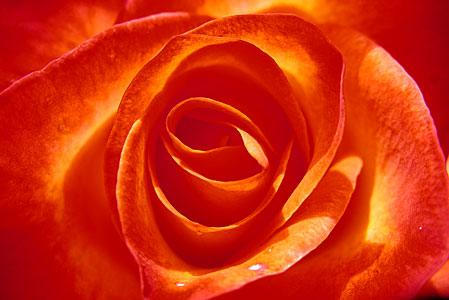 Red Orange - SALDEMER