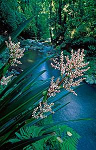 Canungra Creek - Thomas Marent