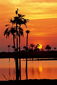 Sunset, Maguari Stork I - Thomas Marent
