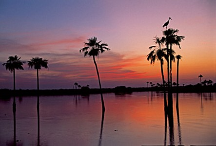 Sunset, Maguari Stork II - Thomas Marent