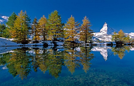 Matterhorn with larches I - Thomas Marent
