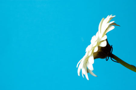 Blumen & Pflanzen - weiss auf blau - Gabriele Diwald