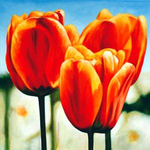 Blumen & Pflanzen - Rote Tulpen - Klaus Boekhoff