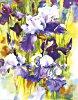 Kunstdruck - Maryse Forget - Iris I
